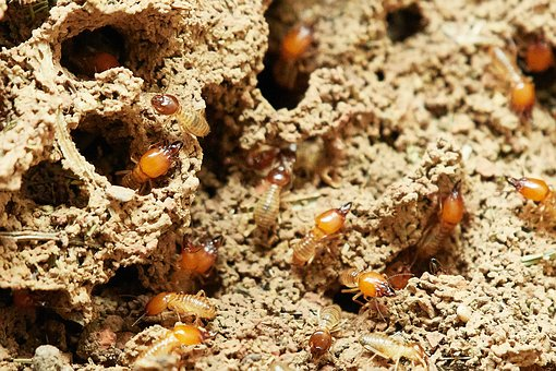 Ways To Eliminate The Presence Of Termites In Your Home?